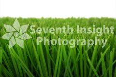 Plastic Grass 2